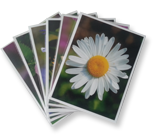flower essence cards