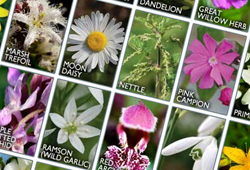 buy personalised flower essences online